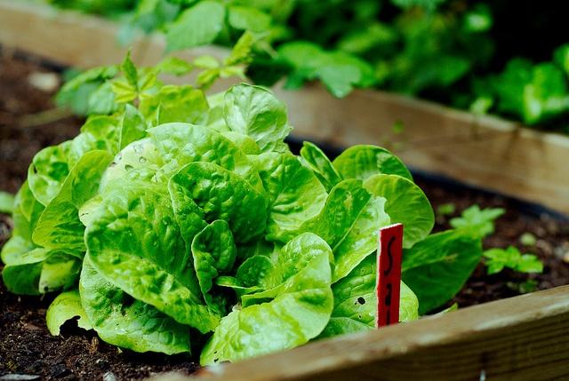 DIY salat