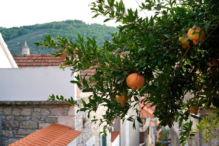 Island Hopping in Croatia - A pomegranate tree