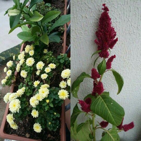 Sonbahar çiçekleri... ❤❤❤❤