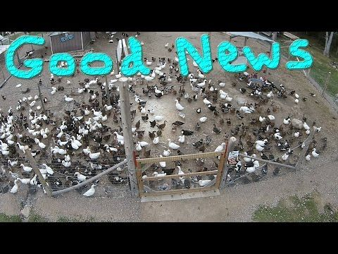 GoFundMe Thank You #152 Ducks For The Homeless - YouTube