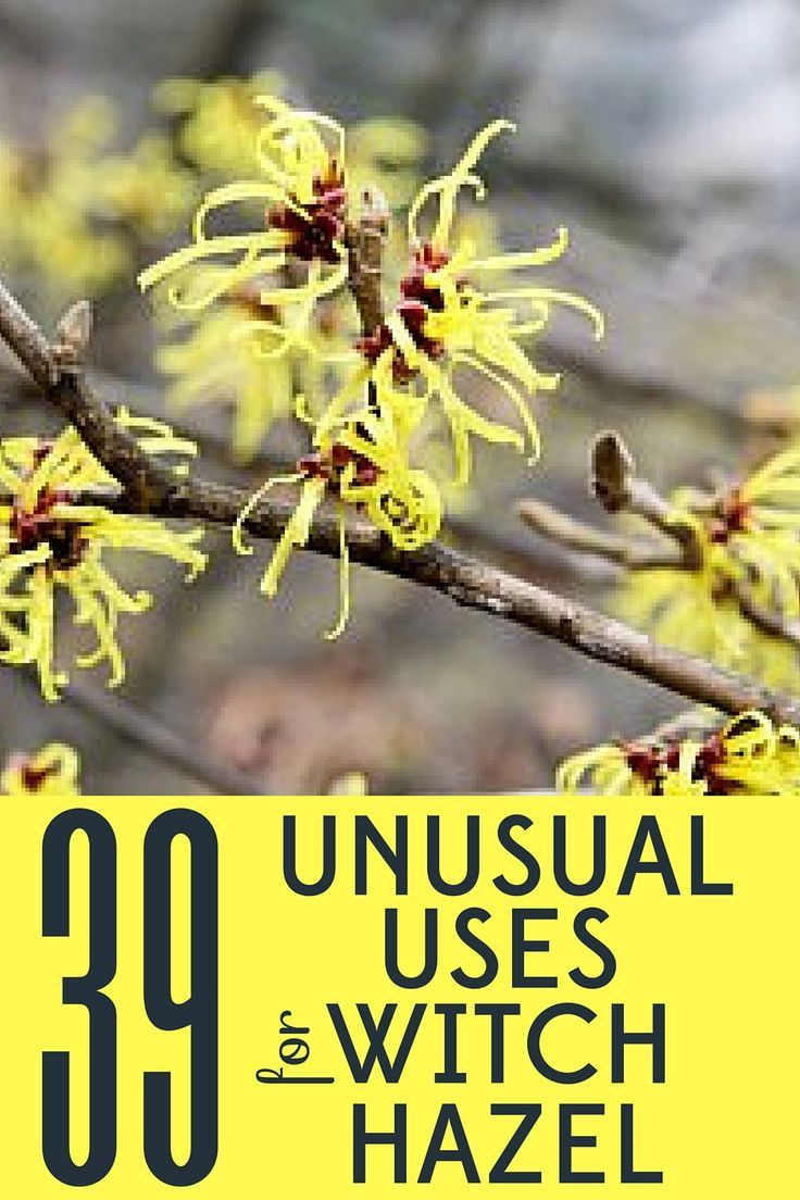 Save money with these 39 unusual uses for witch hazel around your home, garden, and especially in your bathroom!
