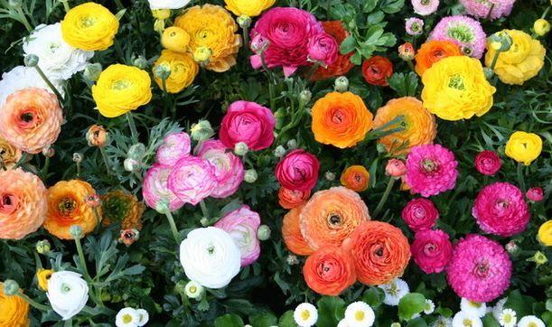 Top tippek Rendelési növények Online - Kert Képek és tippek