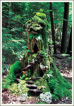 Moss covered faerie house deep in the woods
