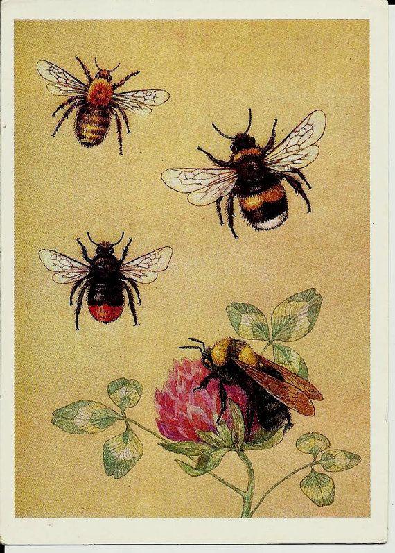 Young Entomologist Vintage Russian Postcards set of 32