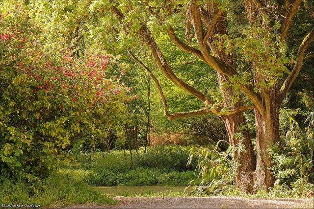 3. arboret simeria
