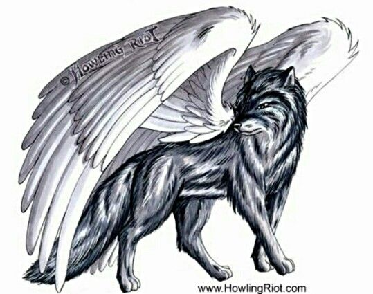 Black wolf with white wings