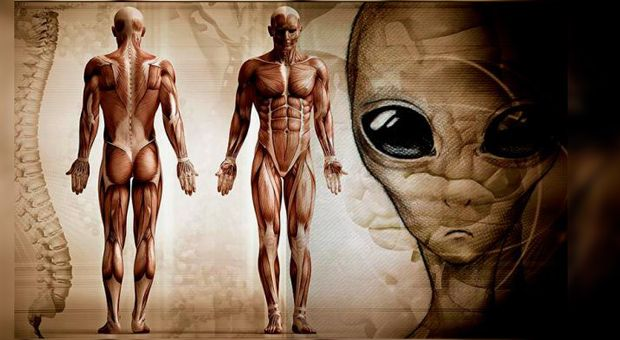 Posted by Madeline NEON NETTLE Dr. Ellis Silver has conducted an academic study into the evolution of the Homo Sapien, and arrived at a less-than-conventional theory that human beings aren't Continue Reading →