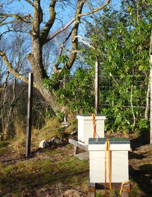 Our new apiary with three hives of honey bees