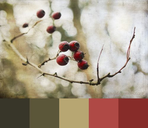 textured branch palette: Wedding Colour, Winter Berries, Warm Colors, Red Berries, Poetic Winter, Colors Palettes, Berries Inspiration, Colour Palettes, Berries Colors