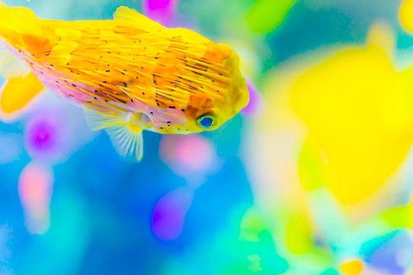 周辺でも楽しめる!東京デートに「すみだ水族館」がおすすめの理由4つ   ハウコレ