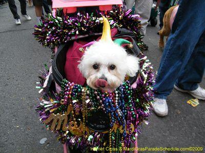 2016 Mystic Krewe of Barkus New Orleans Mardi Gras Parade Schedule 2016