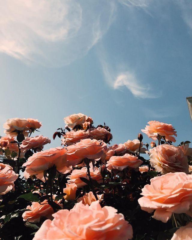 Https Itsaflip Com Flower Aesthetic Flower Backgrounds