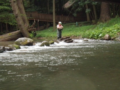 39 best images about rivers and lakes and water on for Elk river wv trout fishing