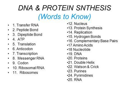DNA & PROTEIN SNTHESIS (Words to Know) 1. Transfer RNA 2. Peptide Bond 3. Dipeptide Bond 4. ATP 5. Translation 6. Anticodon 7. Transcription 8. Messenger.
