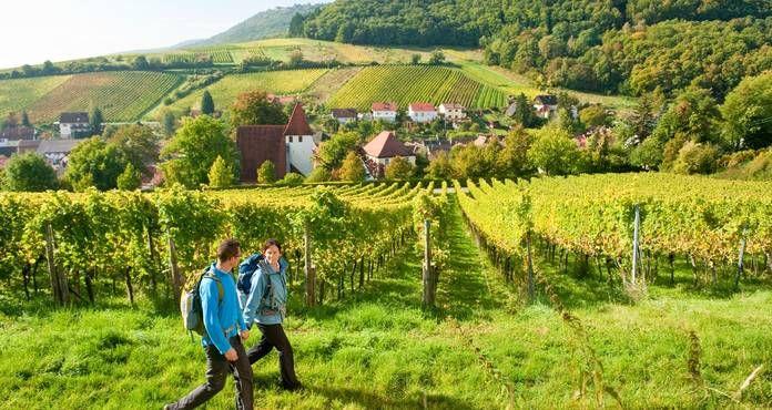 Wandern Sie in der Pfalz, wo sich Weinberge und Wald abwechseln: Eine Wanderung über den Pfälzer Weinsteig führt auf 172 Kilometern von Neuleinigen nach Schweigen-Rechtenbach.