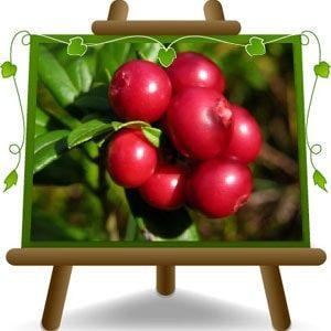 Piante da Frutta di Euro Plants Vivai, Vivaio Vendita Online Piante in vaso. Spedizione Gratuita in Italia da € 50,00. Spedizioni in Europa.