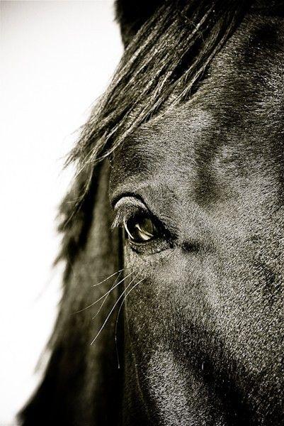 11x14 fine art horse metallic photograph by equinoxphoto on Etsy. $48.00 USD, via Etsy.