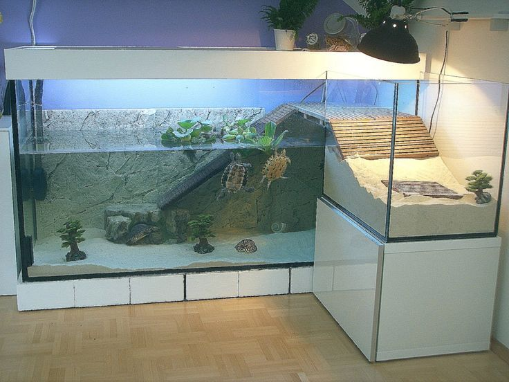 Most Recent Free Of Charge Turtles Pet Home Ideas Kids Have A Normal Curiosity About The Globe About These Indi Aquatic Turtle Tank Turtle Pond Turtle Aquarium