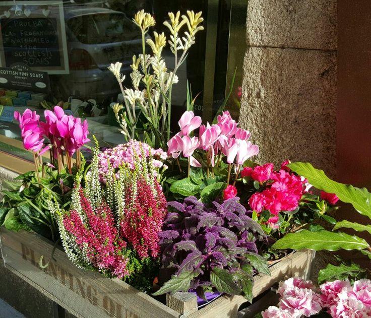 Plantas en Gadea flores