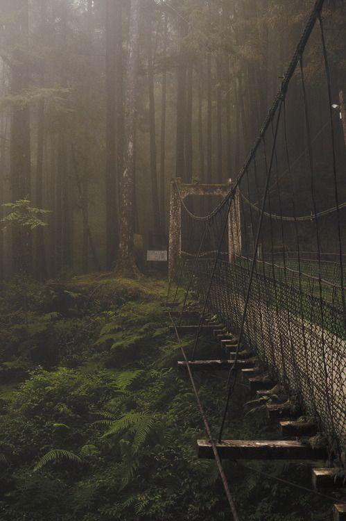 Forest Bridge, Japan.