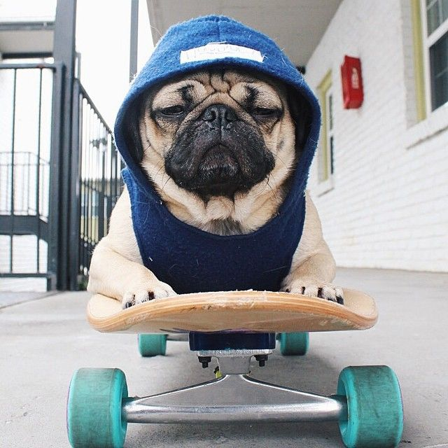 Doug the Pug - Drive to work on a Monday morning, ----- P ...