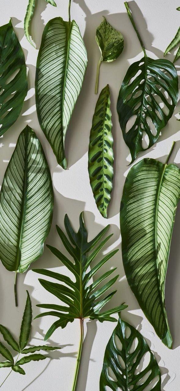 152 besten greenhouse bilder auf pinterest sukkulenten zimmerpflanzen und balkon. Black Bedroom Furniture Sets. Home Design Ideas