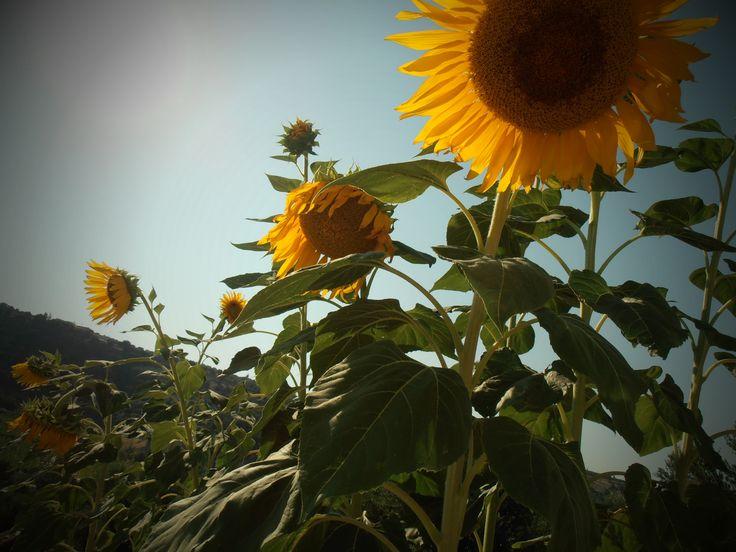 SUN AND SUN