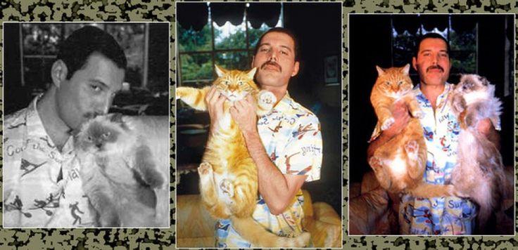 Знаменитые любители кошек и их питомцы   Шоу-бизнес на dayonline.ru