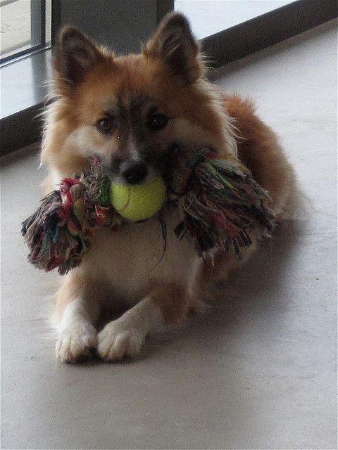 10 Great DIY dog toy ideas-   1. Sock & ball  2. Snack sock  3. Rope ball  4. Kitchen towel braids  5. Empty cuddly toy  6. One big knot  7. Milk-bottle treat toy  8. Garden hose toy  9. Crackling sock  10. Cardboard tumblar