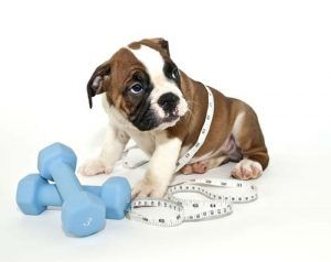 Week 1 - Assessing Dogs Weight for Diet