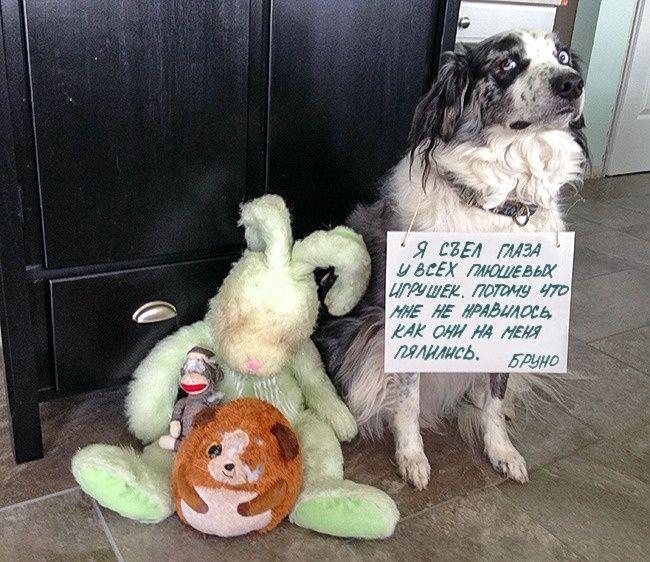 всей щенок просит прощения картинки что можно