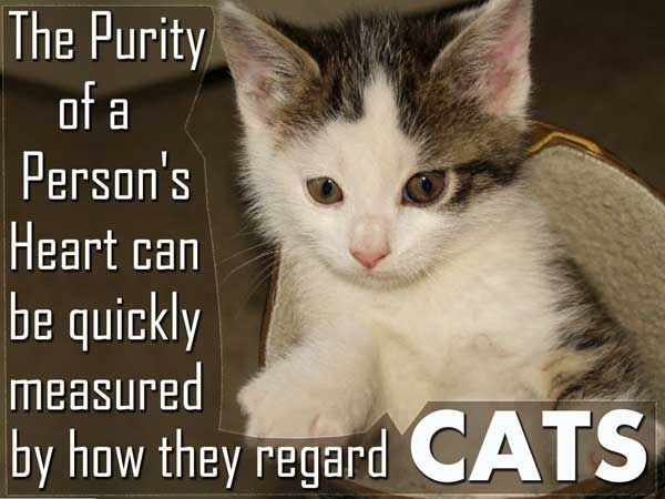 Quotes About Cats Stunning 71 Best Cat Sayings And Quotes Images On Pinterest  Kitty Cats