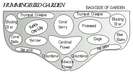 Hummingbird garden layout idea