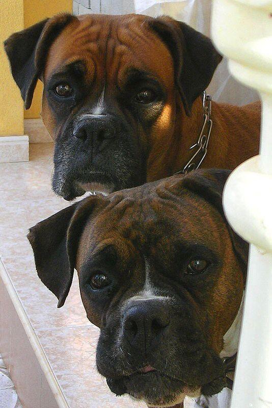 Les 870 meilleures images du tableau les chiens ne font pas des chats sur pinterest - Les chiens ne font pas des chats ...