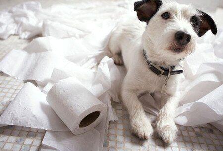 @Arion_ES· Ladra ,destruye objetos u orina si está solo en casa?Puede sufrir #ansiedad por separación! www.elblogdearion.com