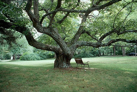Inner Peace can be as simple as letting go, and resting under the shade of an old tree. -   The path taken to find inner peace is as hard or simple as a person makes the journey of self acceptance to be.-  Author/Photographer-unknown