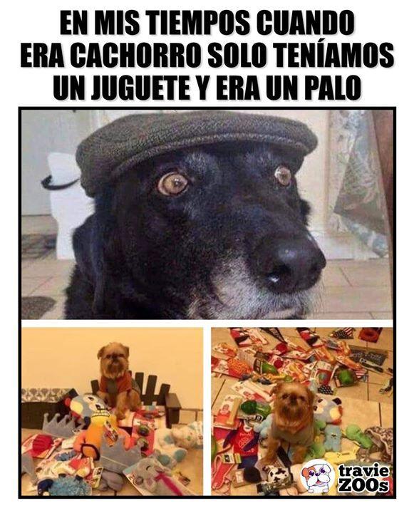 Los Perrhijos De Ahora Ya Estan Demasiado Consentidos Perros Memes Divertidos Humor Culinario
