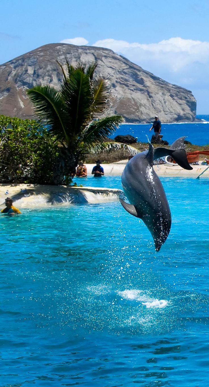 Dolphin Swim Adventure in Cozumel, Mexico
