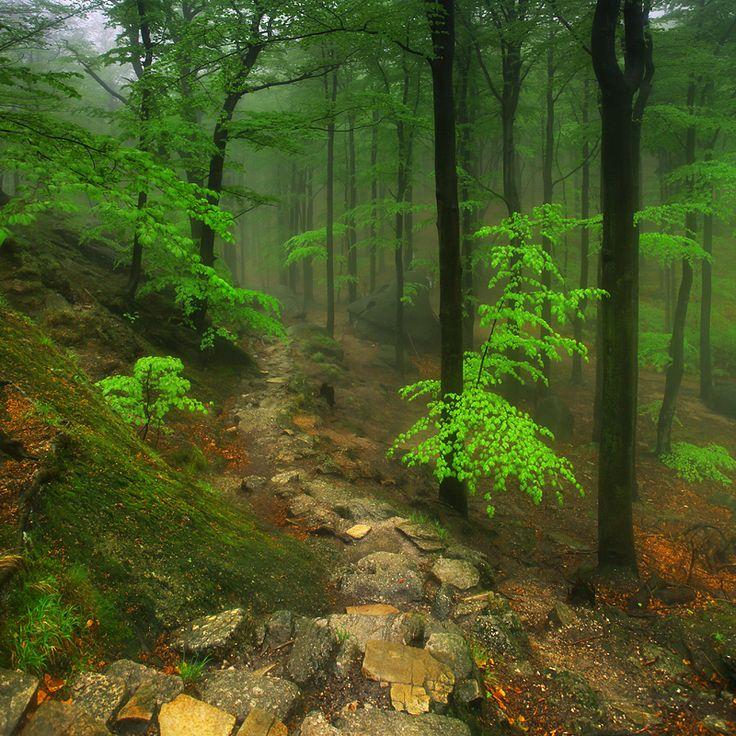 Przełęcz Żarska, Karkonosze
