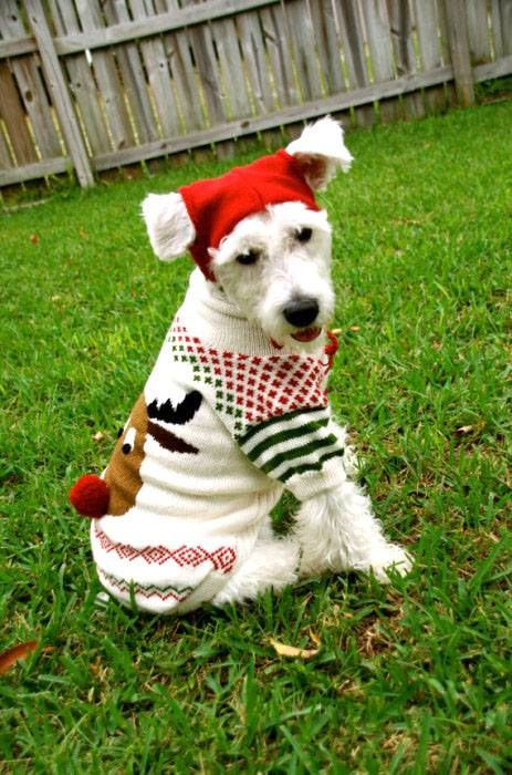 Did you really buy your dog an ugly holiday sweater to wear? Well, tonight you'll have two opportunities to show it off in the Tampa Bay Area (that is, if your dog will wear it for you). In Largo, the Florida Botanical Gardens Foundation presents Holiday Lights Paws Night with tonight's host, Pet Food Warehouse. They'll be bringing some super special goodies to give away. Come walk the beautiful #Gardens and marvel at the million+ lights on display alongside #Christmas decorations!