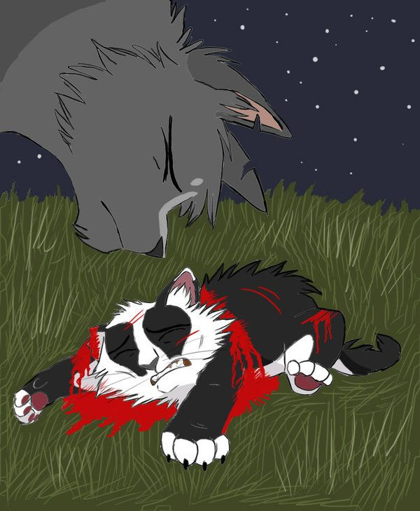 Warrior Cats Badgerpaw