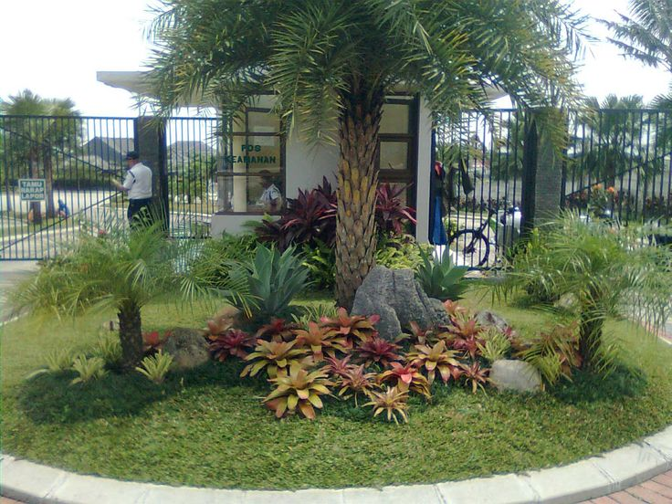 tropical landscaping ideas | Palms landscape ideas