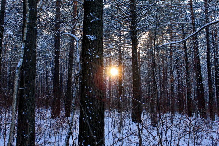 nature landscapes trees forests winter snow seasons sun sunlight sunrise sunset cold wallpaper background