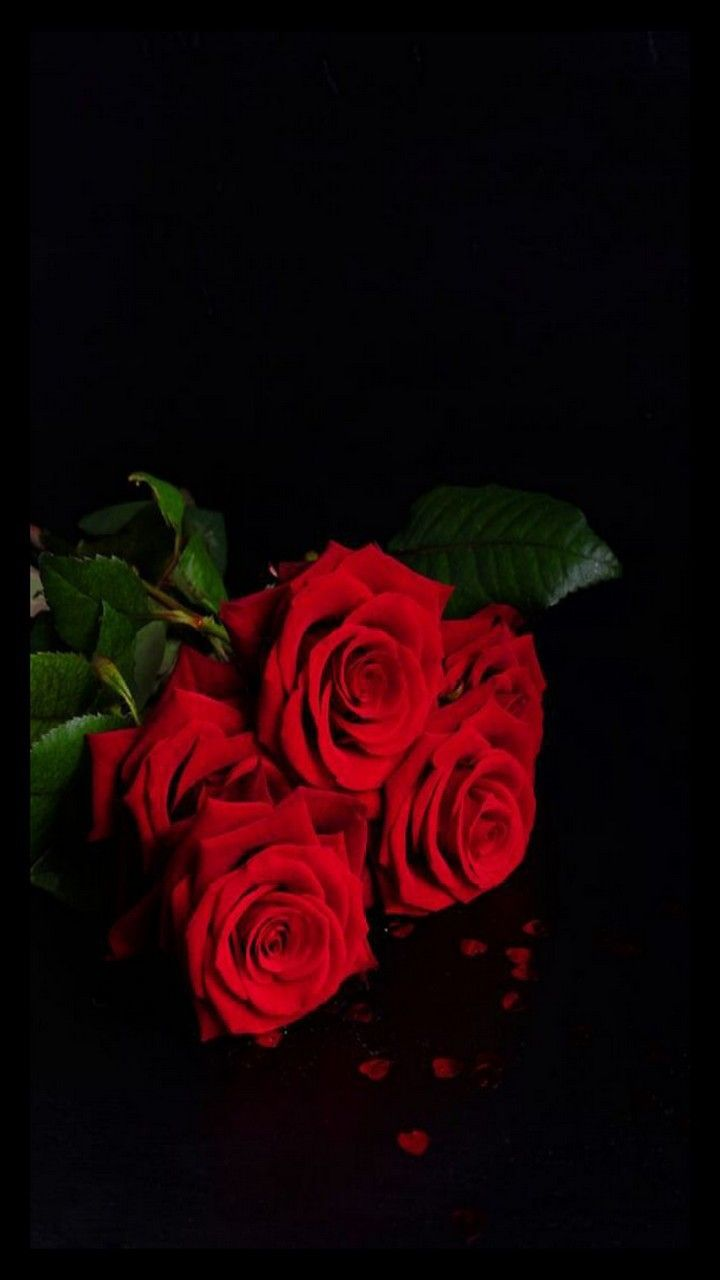 Red Roses Home Screen Beautiful Rose Flowers Red Roses Beautiful Flowers