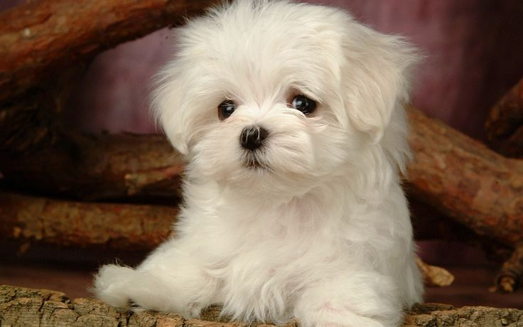 1920 x 1200 px High Resolution Wallpapers = baby dog pic by Bradford Bishop for: TWD
