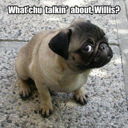 #pug meme. lol i love that line! #cute
