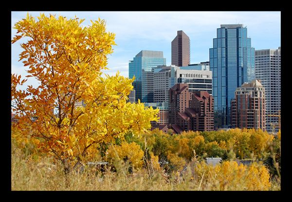 This is Calgary in the fall, just outside the artsy neighborhood of Sunnyside.