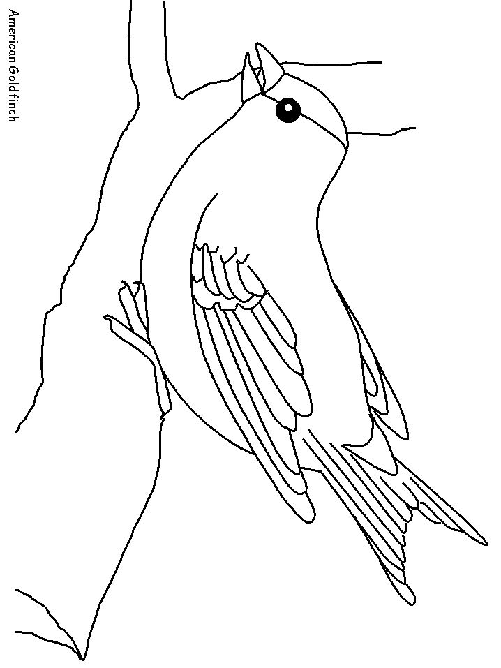 coloring pages goldfinch-#26
