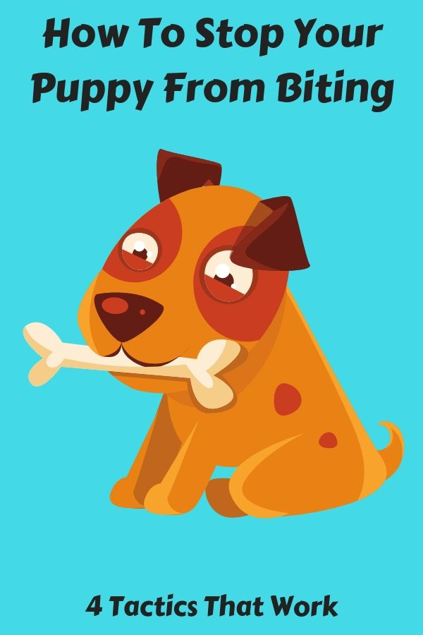 How To Stop Your Dog From Biting Nipping Dog Training Dogs Dog Potty Training