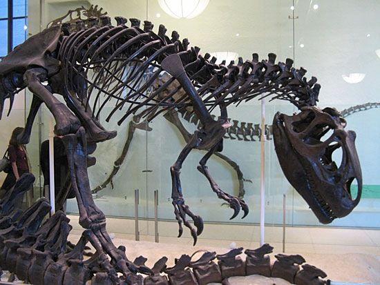 Динозаври та їх потомки: лютого 2016
